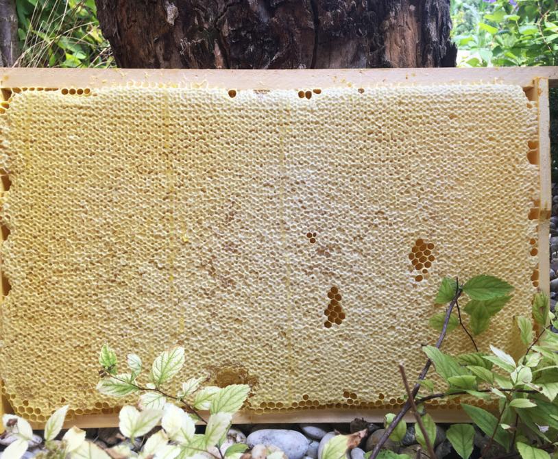 včelý med