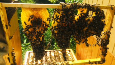 včely primavera